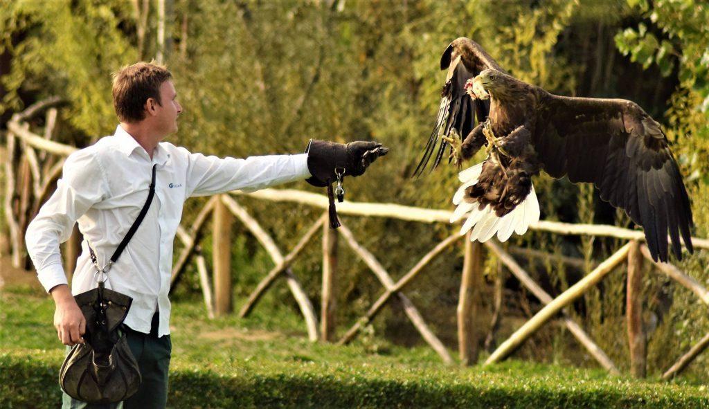 i segreti della falconeria all'Oltremare