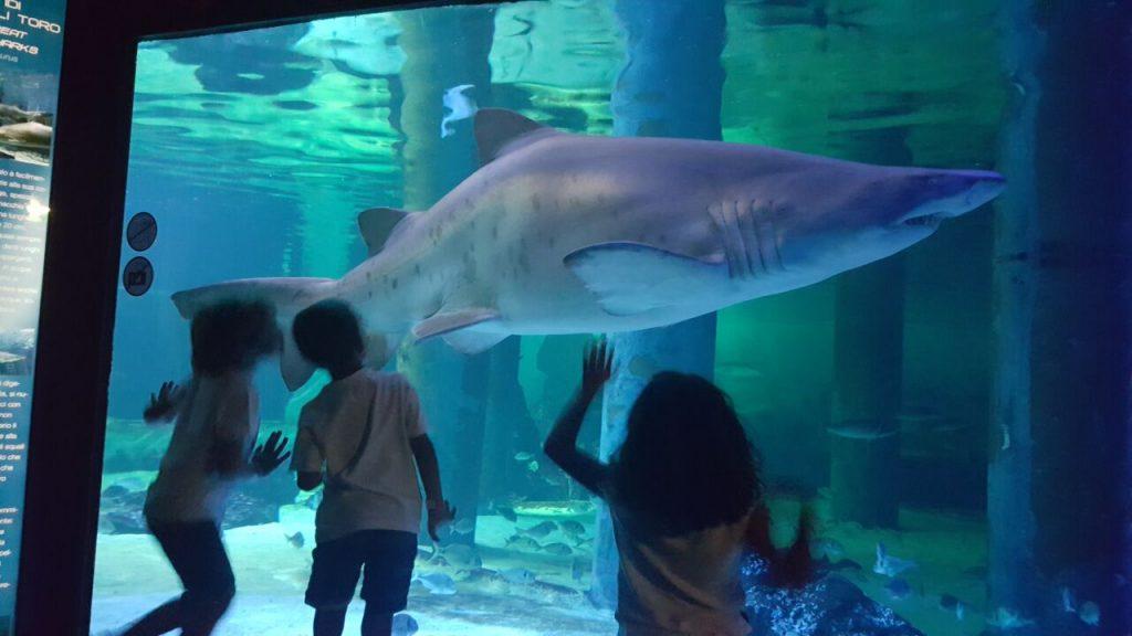 Notti con gli squali all'Acquario di Cattolica