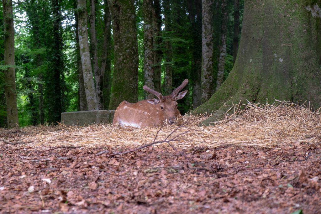 animali foresta umbra
