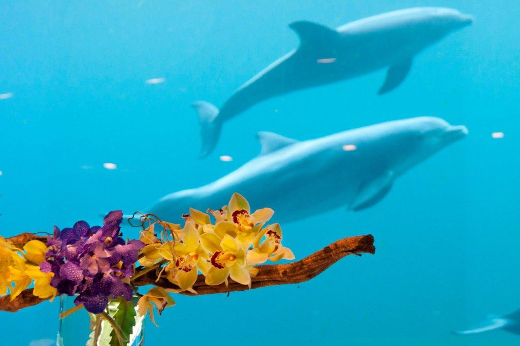delfini-acquario-genova